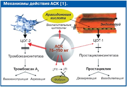 Механизм действия АСК