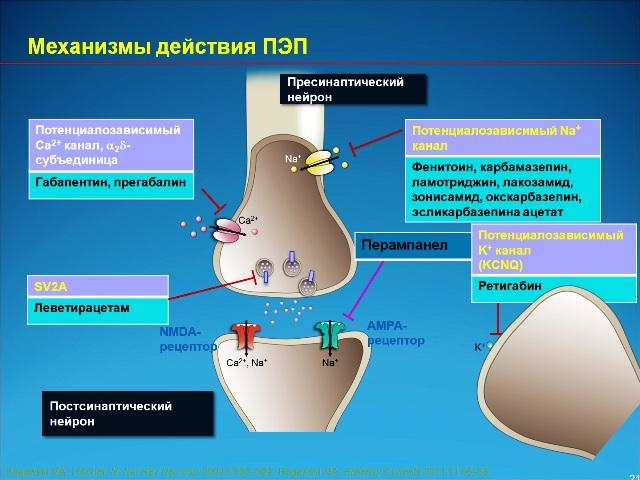 Механизмы действия противоэпилептического препарата