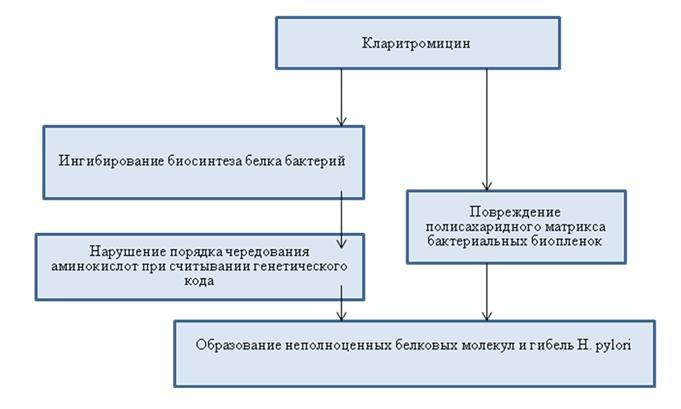Действие Кларитромицина