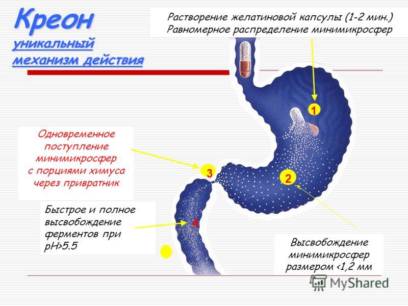 Механизм действия Креона