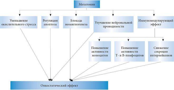 Механизмы онкостатической активности мелатонина