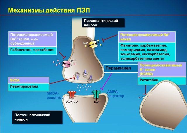 Механизмы действия противоэпилептических препаратов