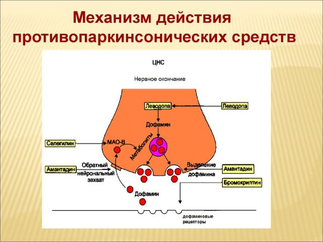 Механизм действия противопаркинсонических лекарств