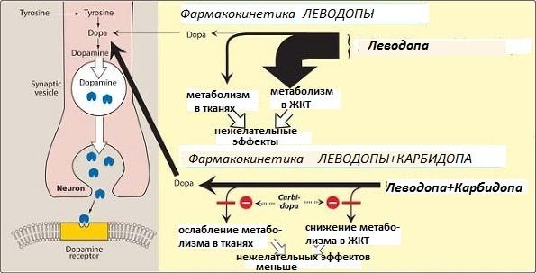 Фармакокинетические особенности