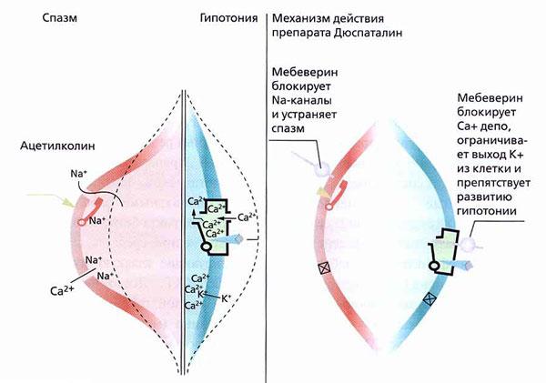 Механизм действия Дюспаталина