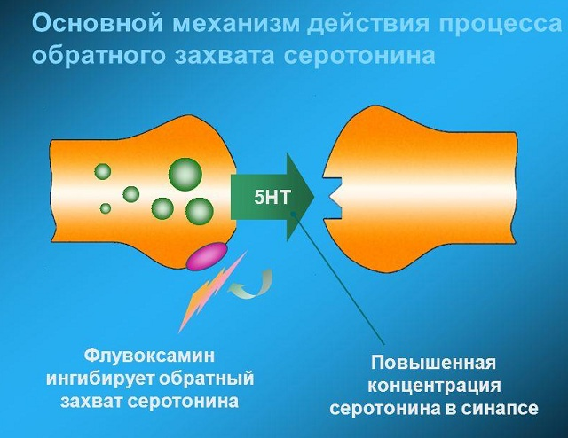 Механизм действия процесса обратного захвата серотонина